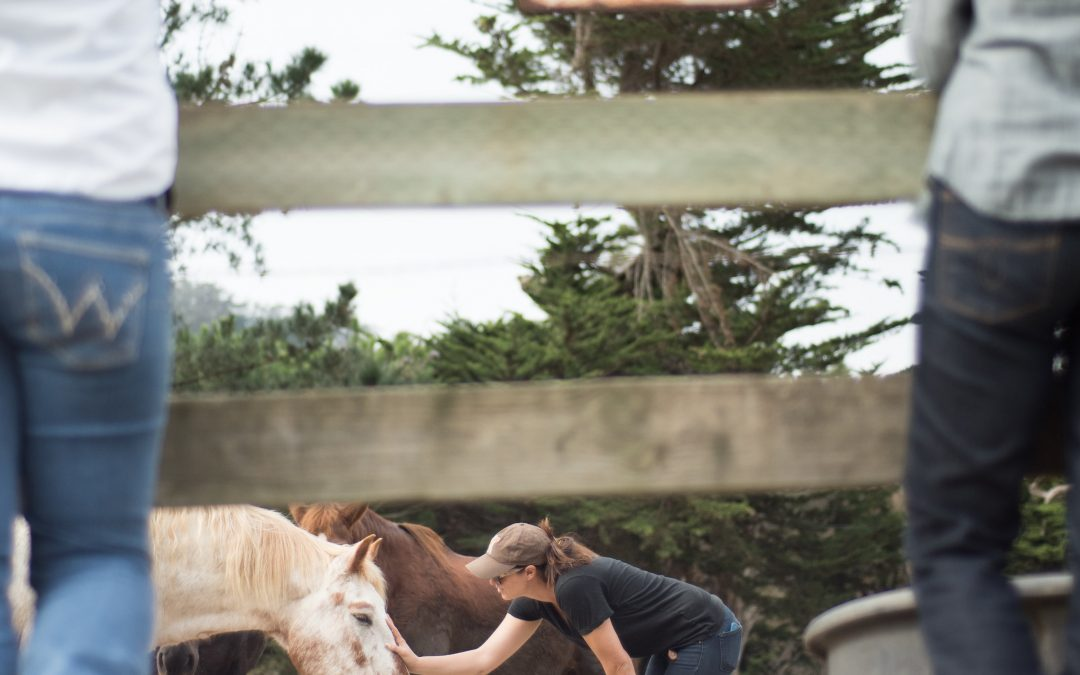 Learn what horses can teach us about leadership and teamwork
